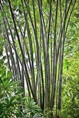 Botanic Garden 3 (5)_00001