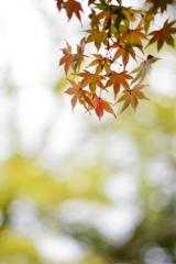 紅葉と玉ボケ