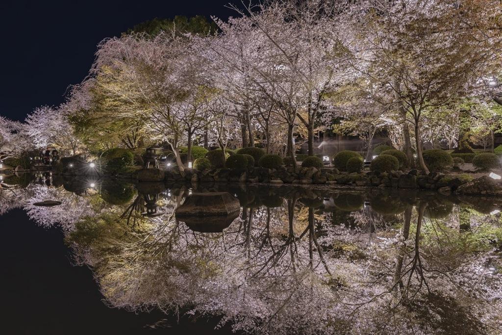 東寺 桜ライトアップ リフレクション