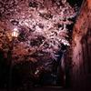 夜桜×倉敷アイビースクエア