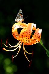 〜 花と蝶2 〜