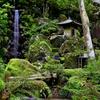箱根山麓深森散歩:洗心の滝