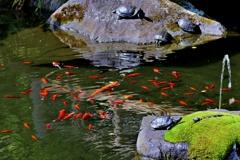 箱根山麓深森散歩:池