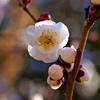 春色微風:乙女の袖