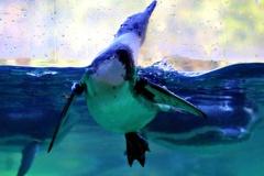 ペンギンの湖