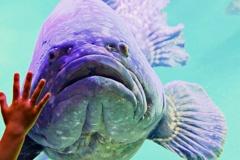 どでかい魚