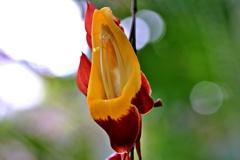 魅惑の花④
