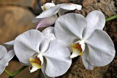 魅惑の花②