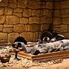 将軍山古墳横穴式石室の内部再現