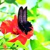 温室に迷い込んだ蝶