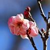 小さい春見つけた♪:蓮久