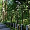 箱根山麓深森散歩