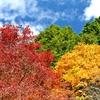 秋の三重奏