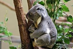 コアラ名人残り時間10分です