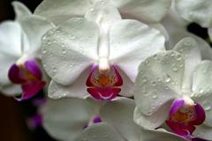 魅惑の花①