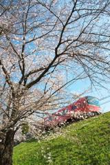 岡崎公園 「 桜 」  2020