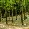 美人林から