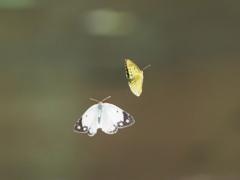 カワセミ待ちの虫撮り 6-2