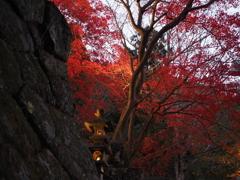 丹沢 大山寺3