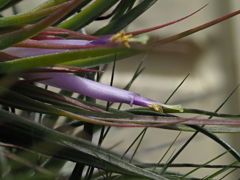玄関から5mの世界(花)イオナンタ2