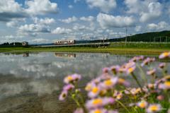 初夏の空と水田