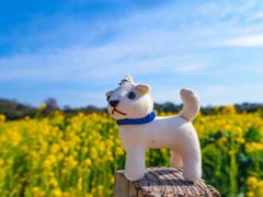 おかげ犬ぽんちゃんの小旅行