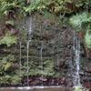 箱根 千条の滝