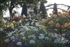 港の見える丘公園の薔薇7