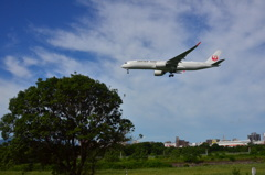 JAL 205   Airbus A350