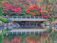 2020-11-16_栃木県中央公園(2)