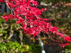 2020-11-15_古峯神社