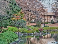 2020-11-16_栃木県中央公園(3)