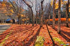 2020-11-15_銀山公園