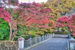 2020-11-16_栃木県中央公園(1)