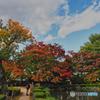 2020-10-29_もみじ公園(1)