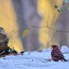 雪と鳥さんの思い出③