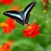 蝶の楽園②