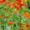 蝶の楽園①