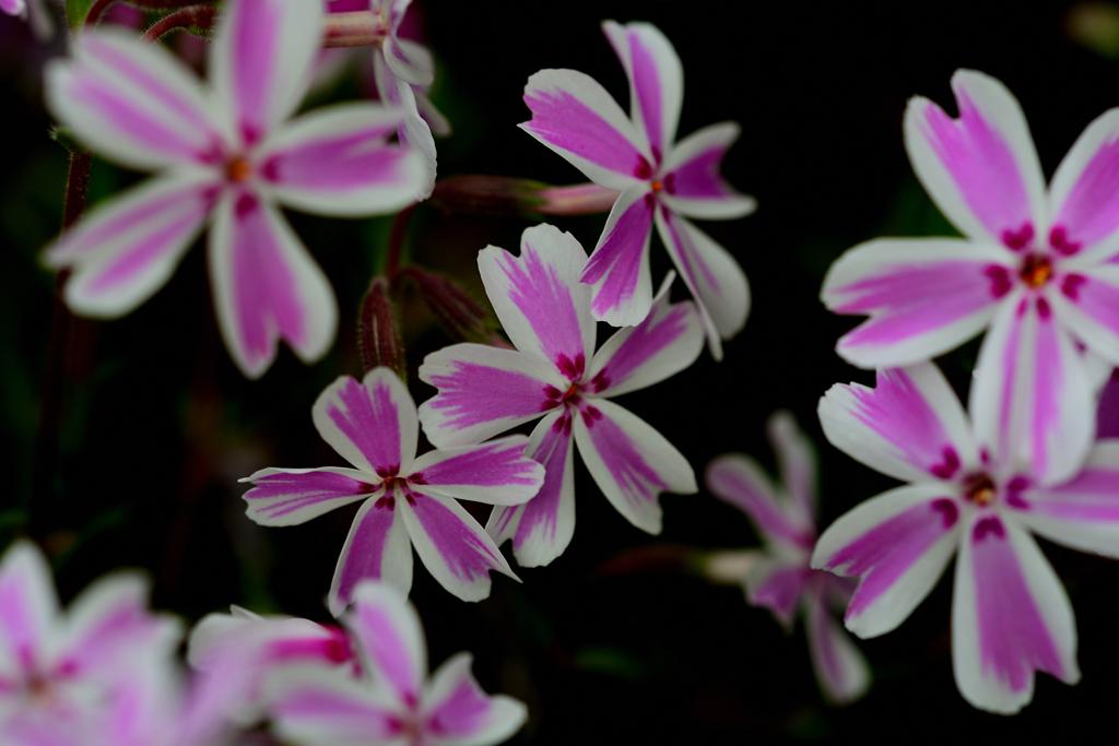 近くの公園の花壇に咲く