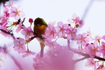 花とメジロさん