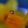 しずくの中の花