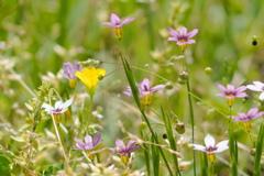 足元の小さな花