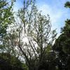 照りつける木漏れ日