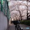 20200404_canon900D_目黒川 (164)