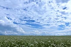 蕎麦雲を見上げる
