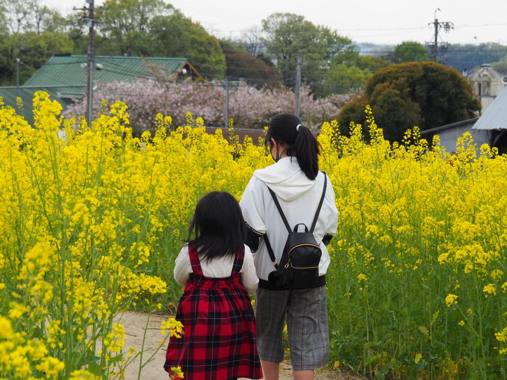 大好きなお姉ちゃんと菜の花畑