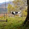 秋の牧場は。