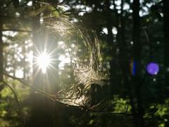 光輝く蜘蛛の巣