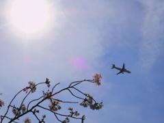 陽と桜と飛行機