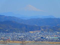 茶畑から望む富士